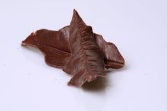 Hojas del chocolate Fotos de archivo libres de regalías