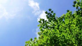 Hojas del cielo azul y del verde de las nubes Imágenes de archivo libres de regalías