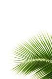 Hojas del coco. imágenes de archivo libres de regalías