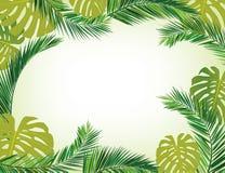 Hojas del coco Imagen de archivo libre de regalías