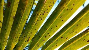 Hojas del coco Foto de archivo libre de regalías