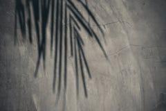 Hojas del coco de la sombra sombreadas en la pared mortal concreta o desnuda fuera del edificio imagen de archivo libre de regalías