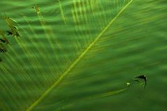 Hojas del coco en el agua Imágenes de archivo libres de regalías