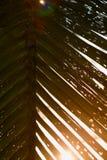 Hojas del coco y luz del sol Imágenes de archivo libres de regalías