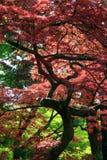 Hojas del color de rosa Fotografía de archivo libre de regalías