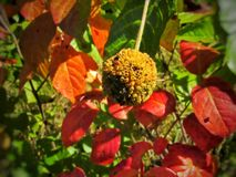 Hojas del color del otoño foto de archivo