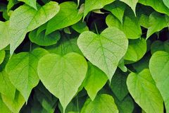 Hojas del corazón, del corazón imagen de archivo libre de regalías