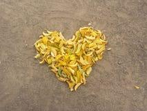 Hojas del corazón Imagen de archivo libre de regalías