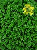 Hojas del engranaje y flor amarilla Fotos de archivo libres de regalías