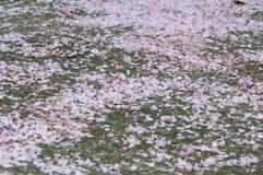 Hojas del flor Imagenes de archivo