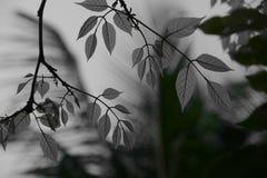 Hojas del gris Imagenes de archivo