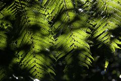 Hojas del helecho en la iluminación Foto de archivo