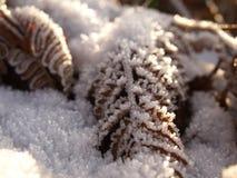 Hojas del helecho en nieve Fotos de archivo