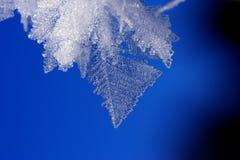 Hojas del hielo Fotografía de archivo libre de regalías
