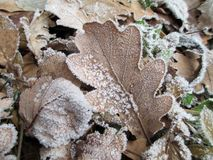 Hojas del invierno Fotos de archivo libres de regalías