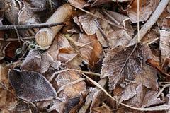 Hojas del invierno Imágenes de archivo libres de regalías