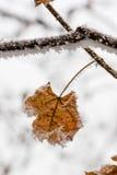 Hojas del invierno cubiertas con nieve y escarcha Fotografía de archivo libre de regalías