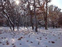 Hojas del invierno y de otoño en la puesta del sol Imagenes de archivo