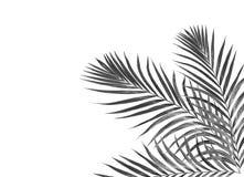 Hojas del negro de la palmera stock de ilustración