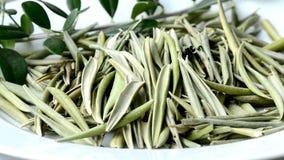 Hojas del olivo, hojas secadas e infusión metrajes