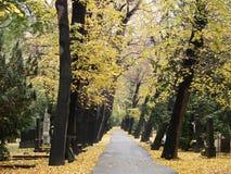 Hojas del oro en cementerio del otoño Imagenes de archivo
