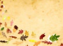 Hojas del otoño Foto de archivo libre de regalías