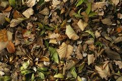 Hojas del otoño Imagen de archivo