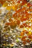 Hojas del otoño Fotografía de archivo libre de regalías