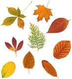 Hojas del otoño Imagen de archivo libre de regalías