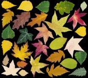 Hojas del otoño cortadas Imagen de archivo libre de regalías