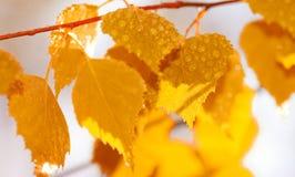 Hojas del otoño después de la lluvia Fotografía de archivo libre de regalías