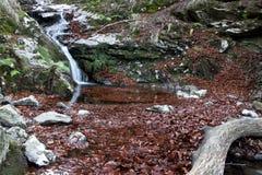 Hojas del otoño en agua Poco río y cascada Foto de archivo