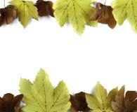 Hojas del otoño en blanco Imagenes de archivo