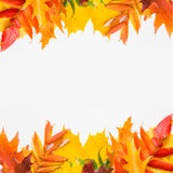 Hojas del otoño en el fondo blanco Imagen de archivo libre de regalías