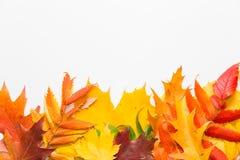 Hojas del otoño en el fondo blanco Fotografía de archivo libre de regalías