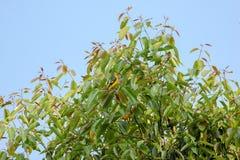 Hojas del pájaro y del verde contra el cielo Fotografía de archivo
