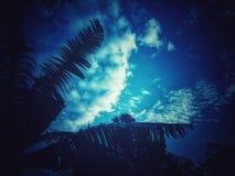 Hojas del plátano al contrario de las nubes imagen de archivo