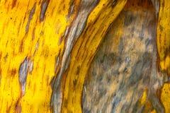 Hojas del plátano de los modelos y de las texturas, verde, amarillo colorido y seco Primer del fondo f selectiva del extracto de  imagenes de archivo