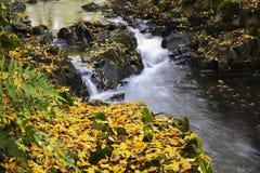 Hojas del río y del amarillo en la estación del otoño Imagen de archivo