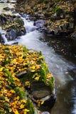 Hojas del río y del amarillo en la estación del otoño Foto de archivo libre de regalías