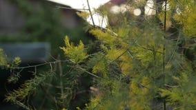 Hojas del roble amarillo en parque del otoño Cámara lenta metrajes