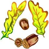 Hojas del roble amarillo del otoño del vector Follaje floral del jardín botánico de la planta de la hoja Elemento aislado del eje Fotografía de archivo libre de regalías