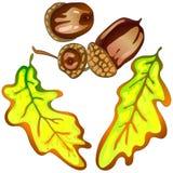 Hojas del roble amarillo del otoño del vector Follaje floral del jardín botánico de la planta de la hoja Elemento aislado del eje Imagenes de archivo