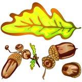 Hojas del roble amarillo del otoño del vector Follaje floral del jardín botánico de la planta de la hoja Elemento aislado del eje Fotos de archivo