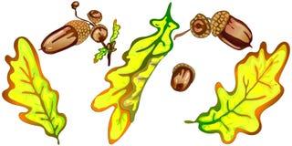Hojas del roble amarillo del otoño del vector Follaje floral del jardín botánico de la planta de la hoja Elemento aislado del eje Fotos de archivo libres de regalías