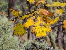 Hojas del roble en otoño Imagen de archivo