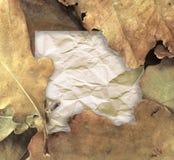 Hojas del roble y papel de nota en blanco Fotografía de archivo libre de regalías