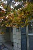Hojas del rojo del árbol de Japonese Fotos de archivo libres de regalías