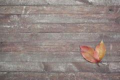 Hojas del rojo en fondo de madera Imagenes de archivo