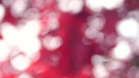 Hojas del rojo en otoño almacen de video